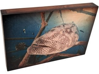 Grouper Fishing Wall Art