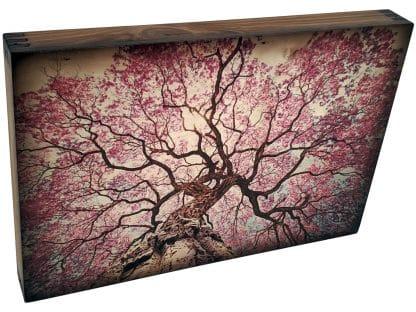 Lapacho Tree Art
